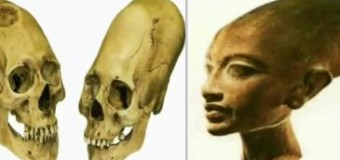 CRANIAL MATURATION OF THE PLUTOCRATIC BLOODLINES by Dr. Terrance Clapson